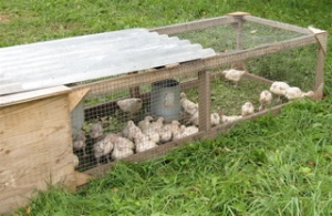 Chicken range cage