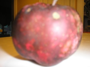 Upper Meadows Farm Red Delicious Apple